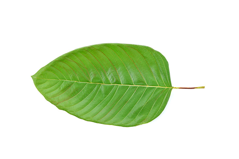In 10 Minutes, I Am Going To Offer You The Fact Regarding Kratom Remove